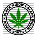 Round Black Widow Marijuana Strain Clipart